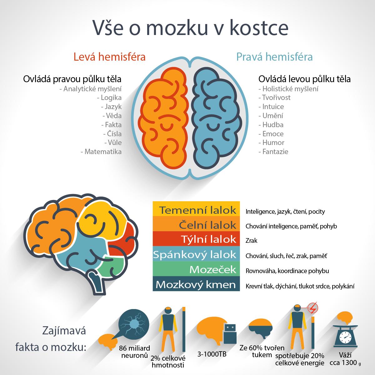Vše, co jste chtěli vědět o mozku a báli jste se zeptat