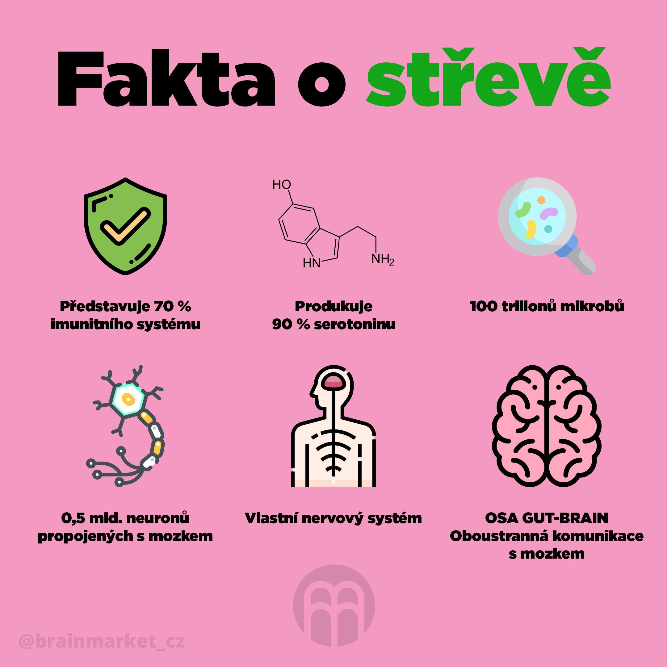 fakta_o_streve_Infografika_Instagram_BrainMarket