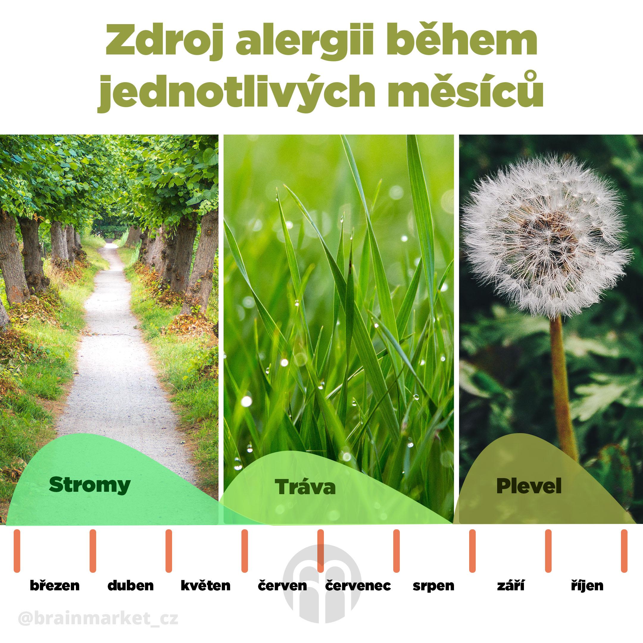 alergie-na-pyl-infografika-brainmarket-cz