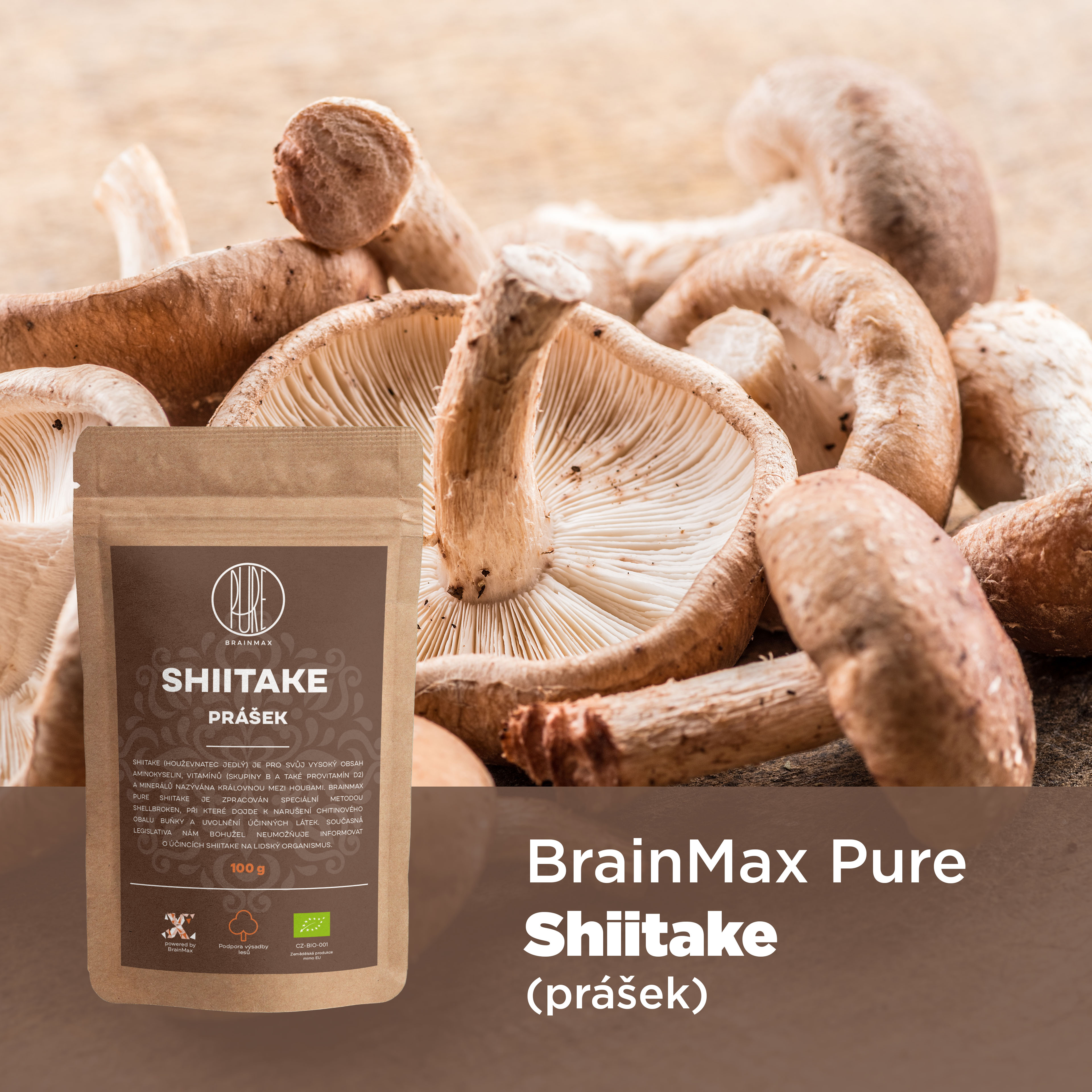 shiitake_infografika_brainmarket_cz