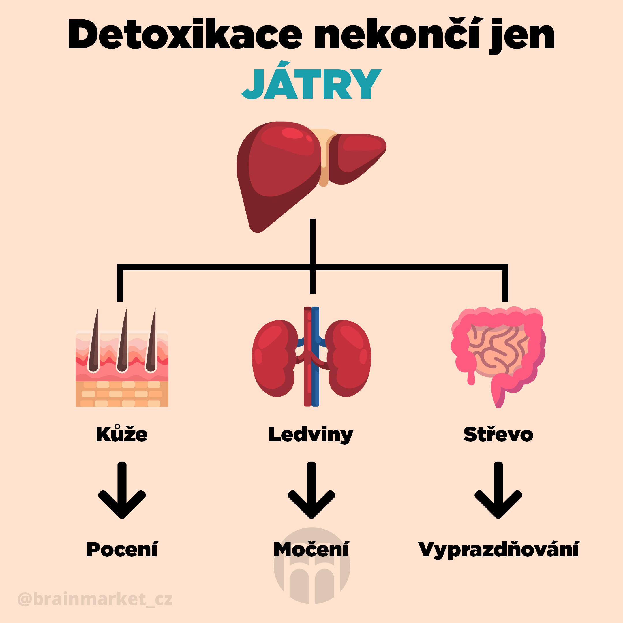 detoxikace_nekonci_jen_jatry_Infografika_Instagram_BrainMarket