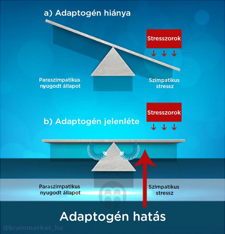 adaptoden_infografika_brainmarket_hu_1