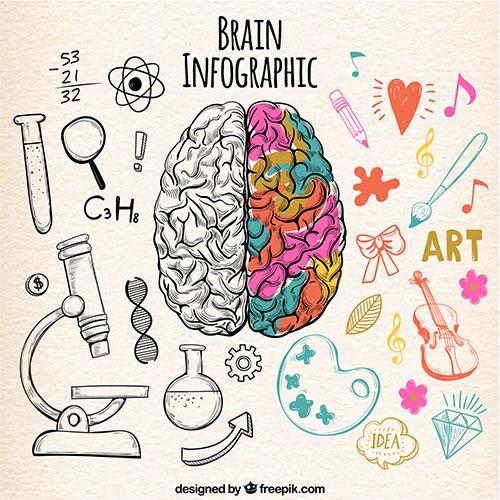 11 potravín pre zlepšenie funkcie mozgu