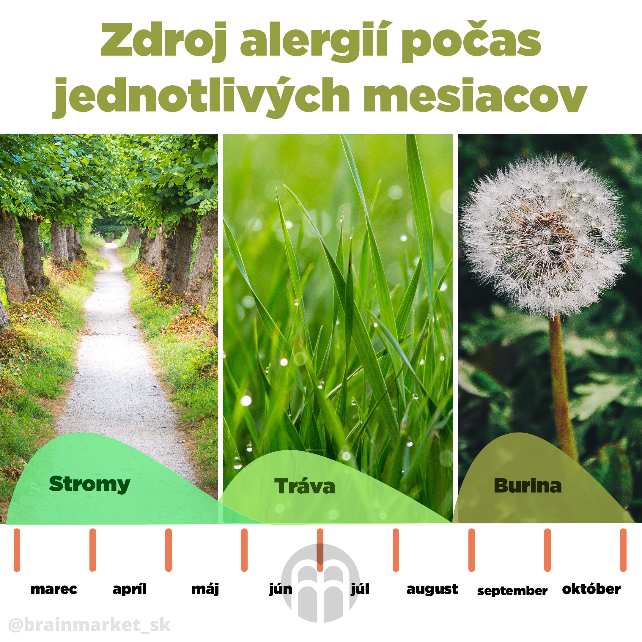 alergie-na-pyl-infografika-brainmarket-sk