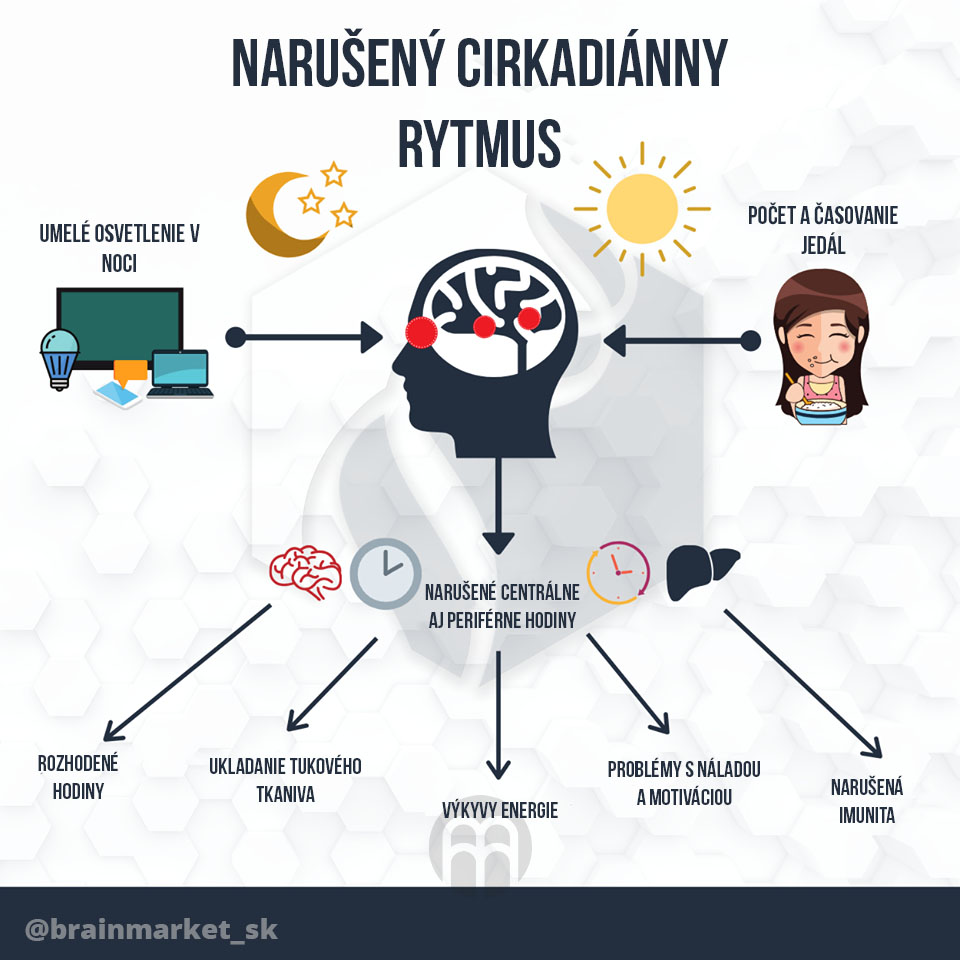 cirkadianny-rytmus-infografika-brainmarket-sk