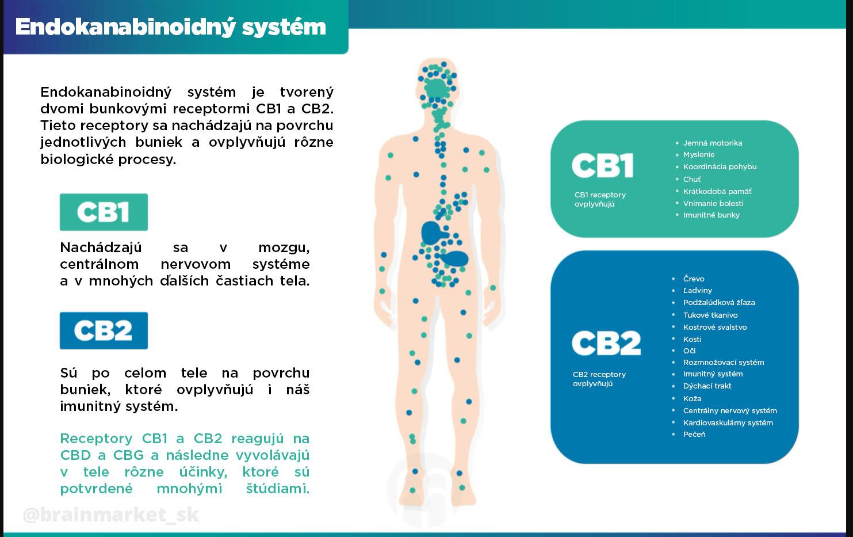 endo-system-brainmarket-infografika-sk