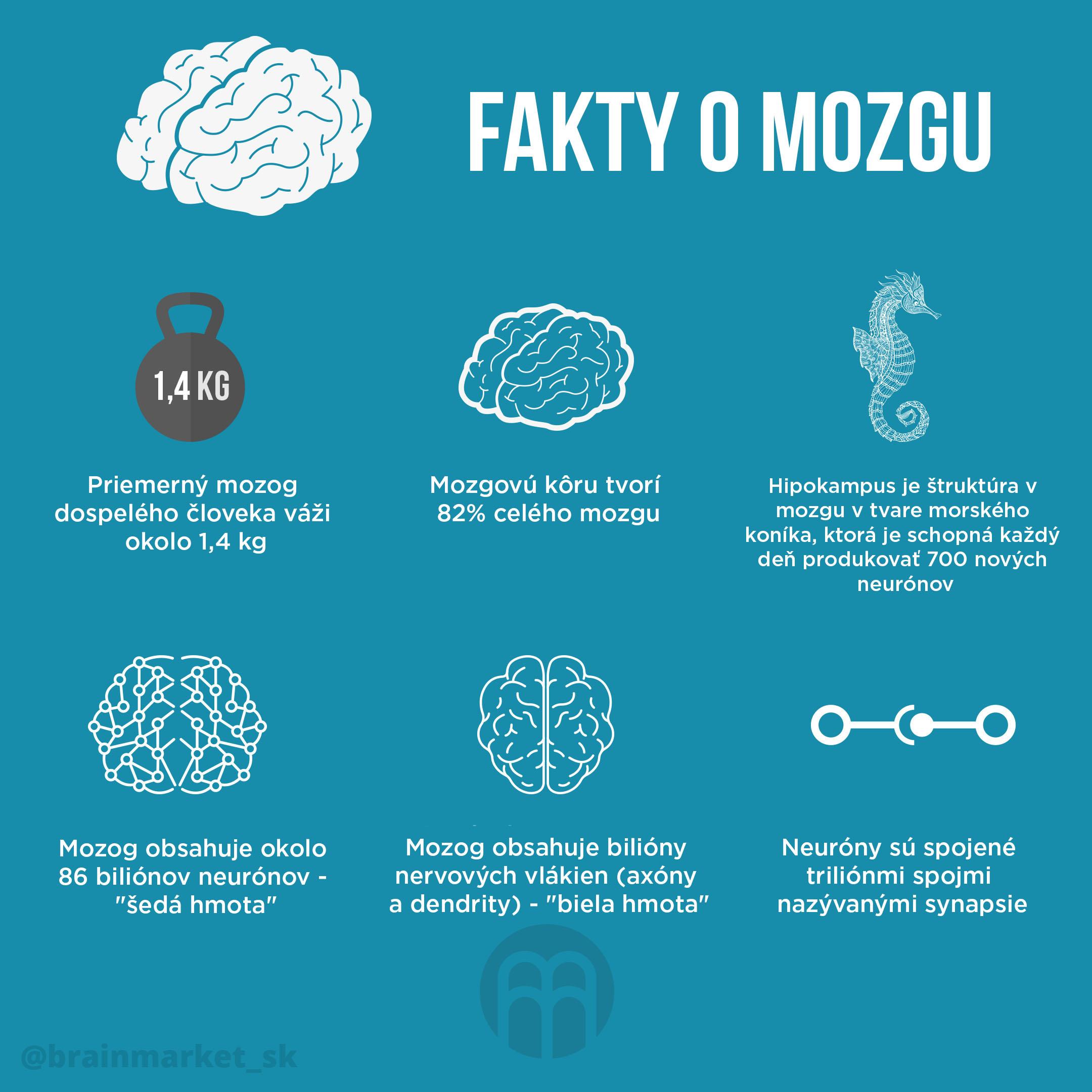 fakta-o-mozku_infografika_brainmarket_sk