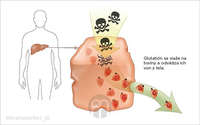 glutathion-detoxikace-infografika-brainmarket-sk