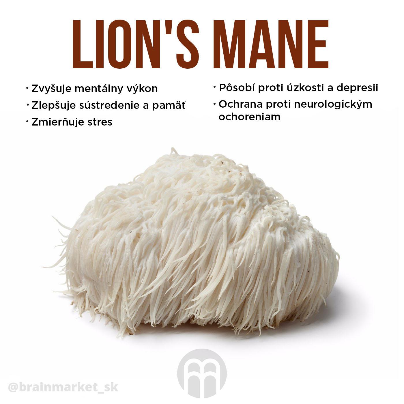 lions-mane-sk