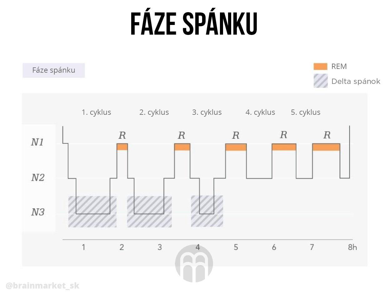 spankovy-cyklus-faze-spanku-infografika-brainmarket-sk
