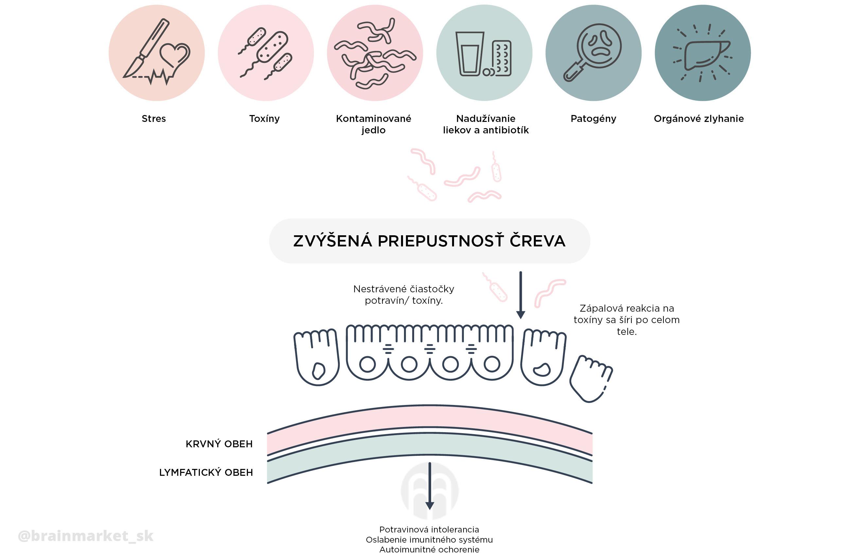syndrom-propustneho-streva-eccevita-infografika-brainmarket-sk