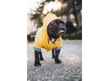 Pláštěnka - žlutá