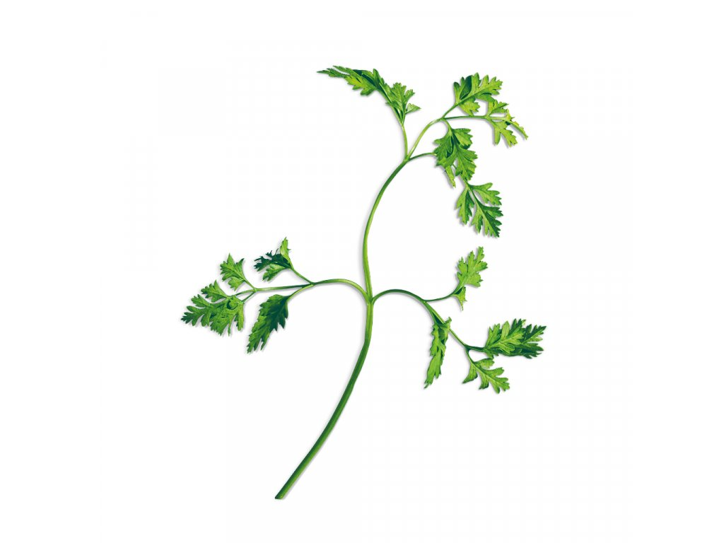Plantui Chervil, 3 kapsle, kerblík třebule (třebule pravá)