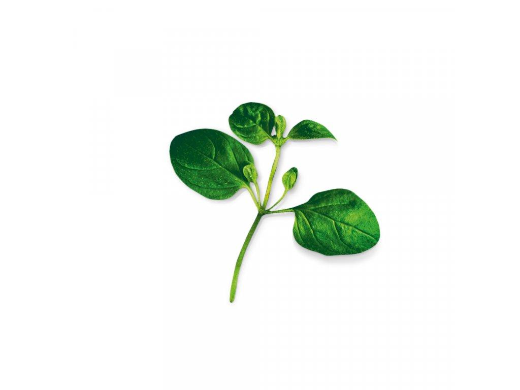 Plantui Dobromysl obecná (Oregano), 3 kapsle