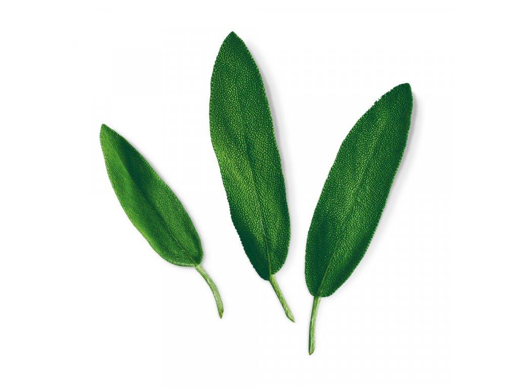 Plantui Šalvěj lékařská, 3 kapsle