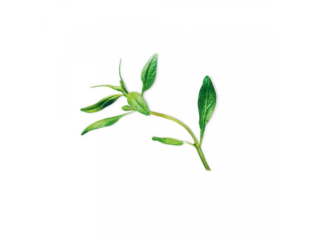 Plantui Saturejka zahradní, 3 kapsle