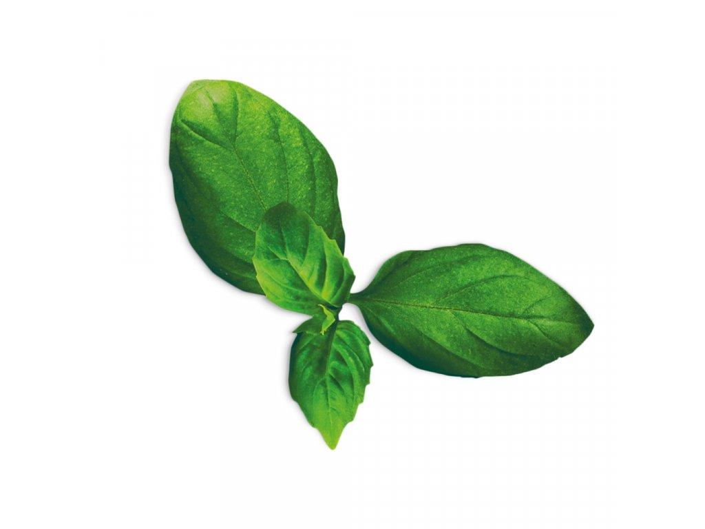 Plantui Basil Spicy, 3 kapsle, bazalka pravá vonná