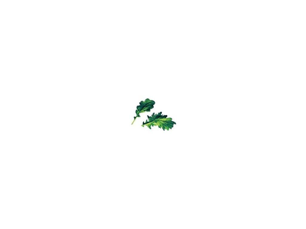 Plantui Komatsuna, 3 kapsle, hořčice zelená 'Komatsuna' (japonský špenát)