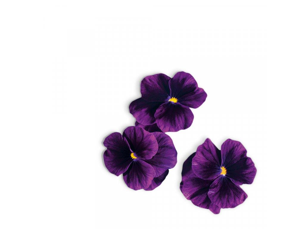 Plantui Viola Purple, 3 kapsle, violka rohatá (maceška) purpurová