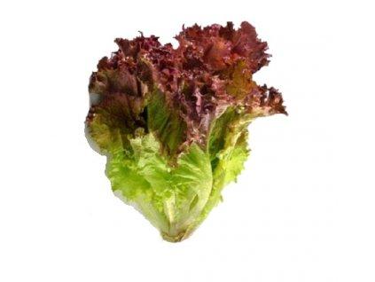 M lolarosa lettuce