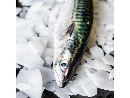 Whole Mackerel 02 600x600