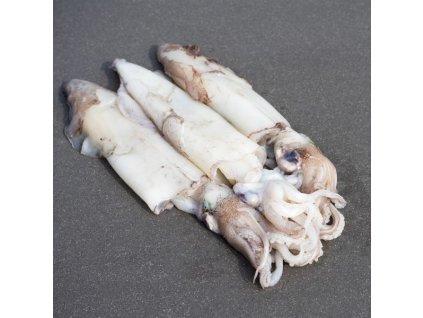 Squid 600x600