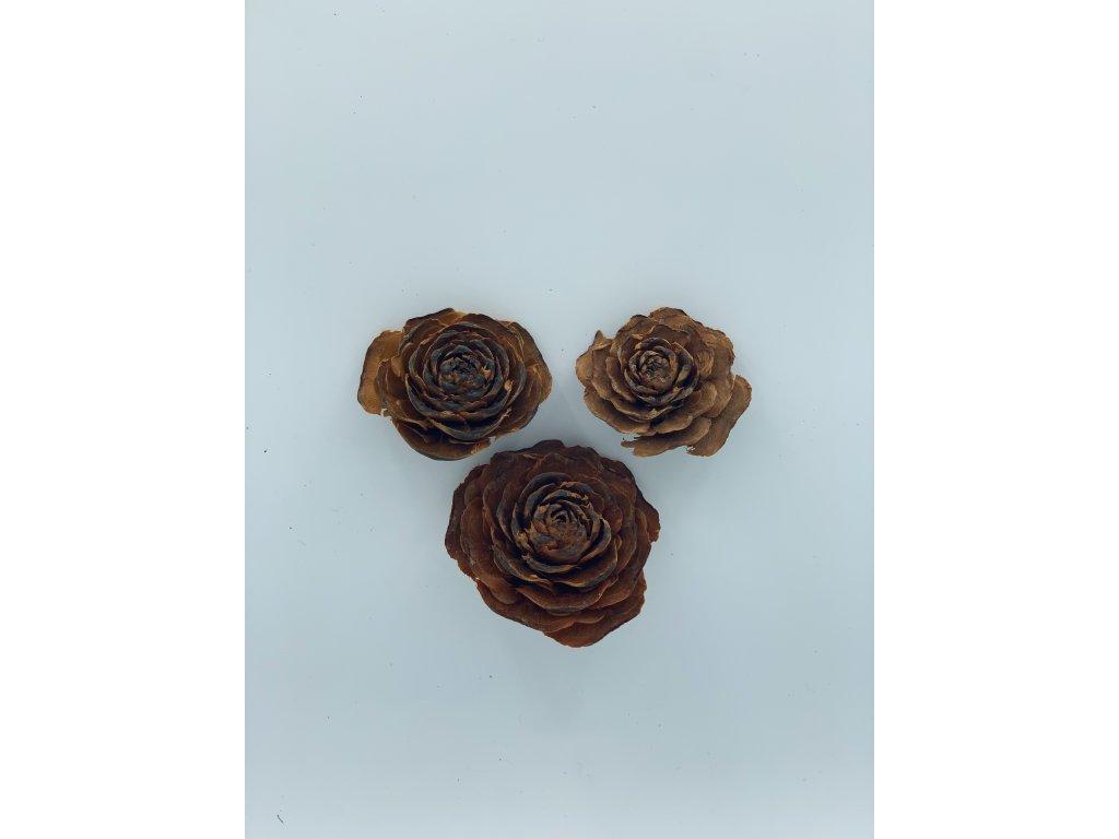 Dekorace sušené cedar rose 3 ks