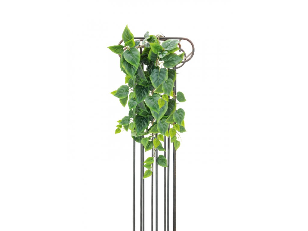 Philodendron trs, 90 cm