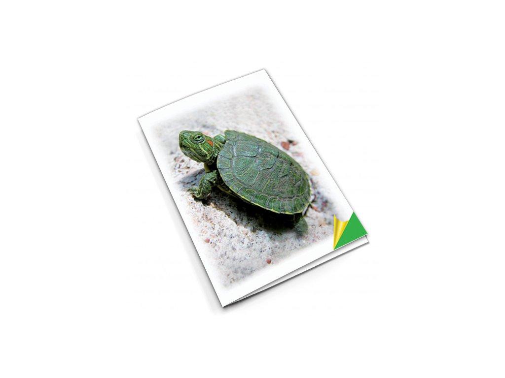 PN42 želva titlstr 3Ds