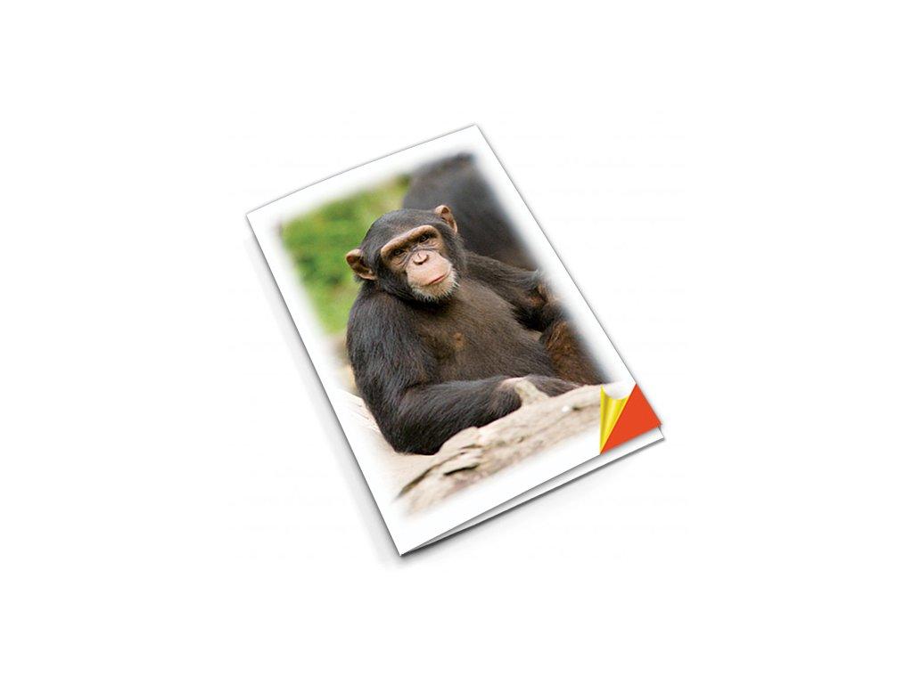 PN39 šimpanz titlstr 3Ds