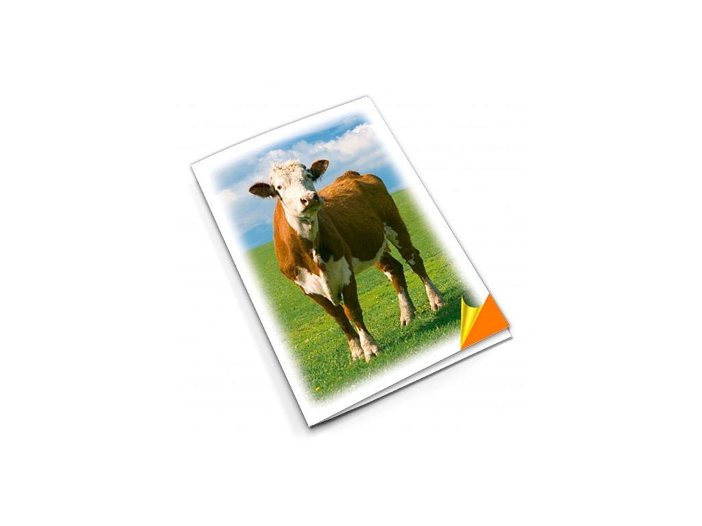PN24 kráva titlstr 3Ds