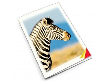 PN48 zebra titlstr 3Ds
