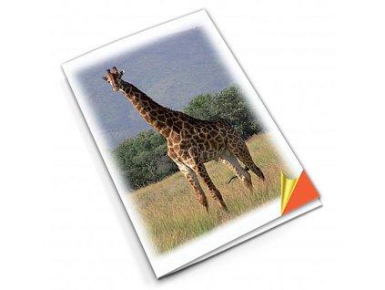 PN30 žirafa titlstr 3Ds