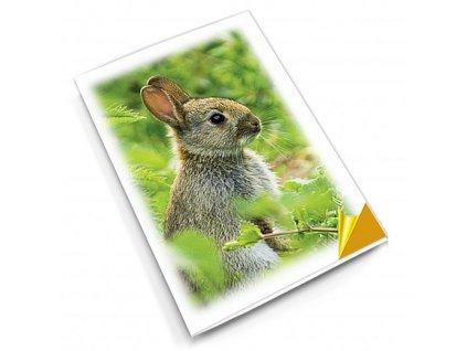 PN3 králík titlstr 3Ds
