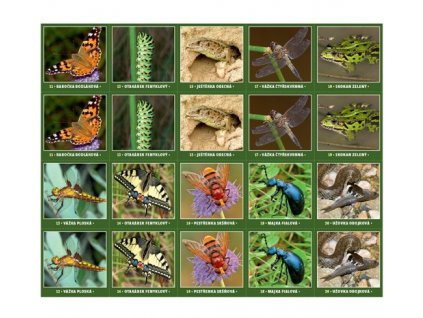 Pexeso Biologická rozmanitost