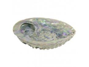 Lastura - Ušeň mořská