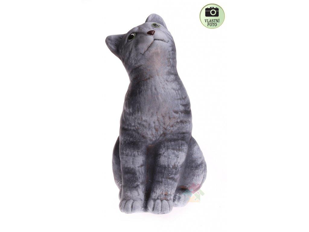 kočka šedá