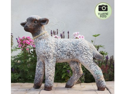 ovce na zahradu
