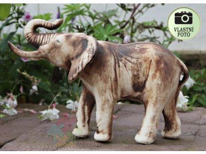 slon pro stesti
