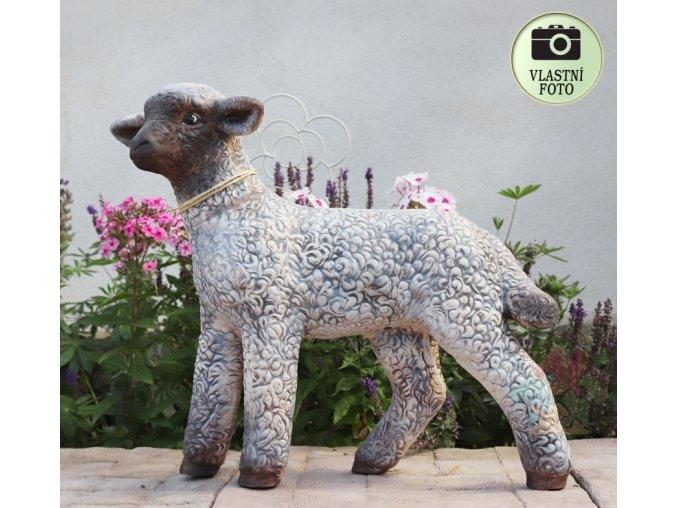 ovečka na zahradu