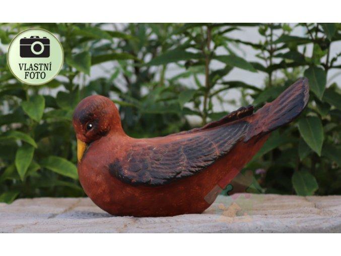 hn+dá holubice