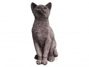 kočka na zahradu
