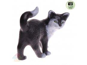 kočka kotě P