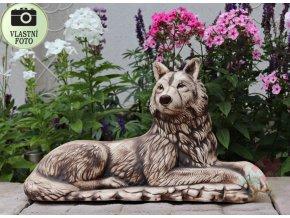 vlk na zahradu