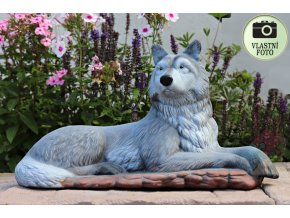 vlk do zahrady