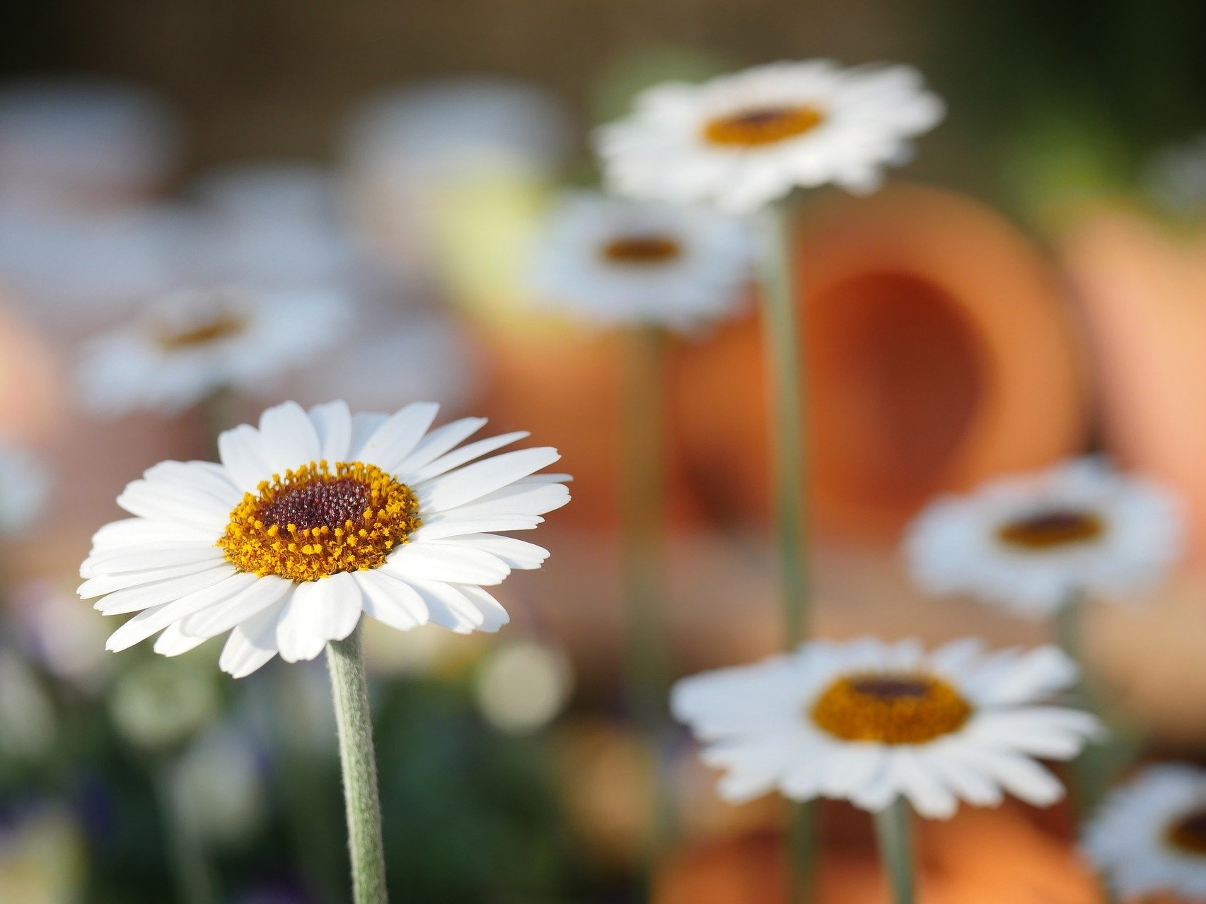 Jarní bylinky