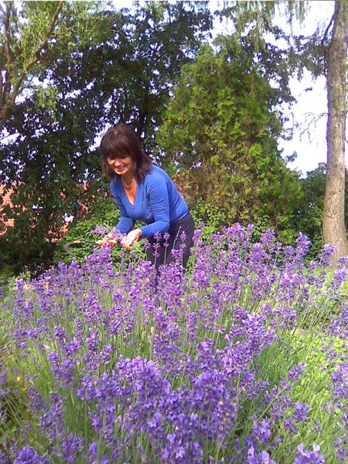 O-NÁS-bylinář-na-zahradě-se-slézem1