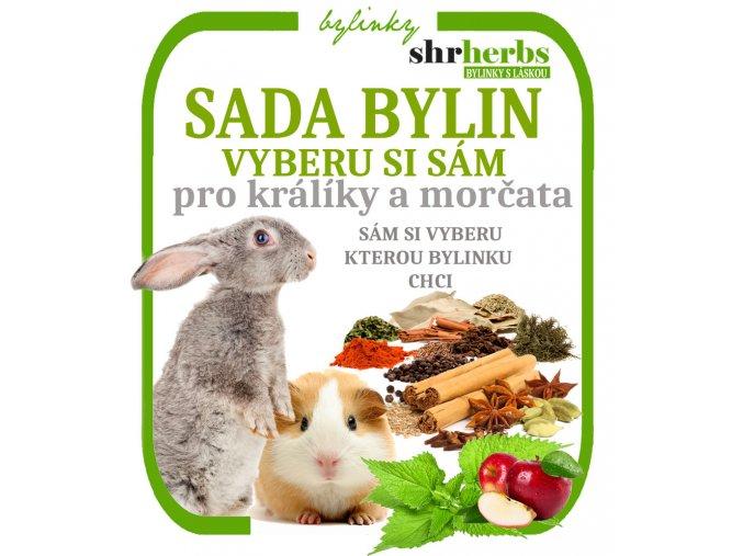 morce SADA BYLIN
