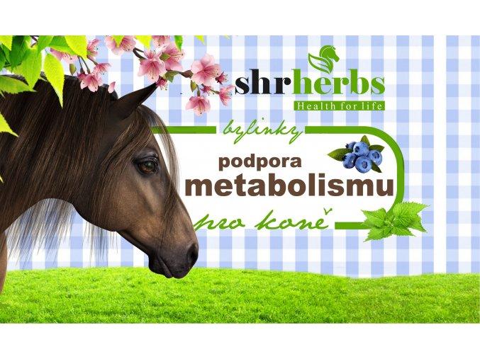 metabolismus 9x15