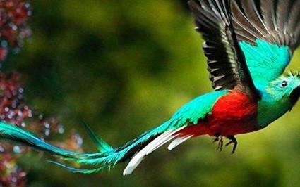 AMAZONSKÝ PROTOKOL - VILCAREINA